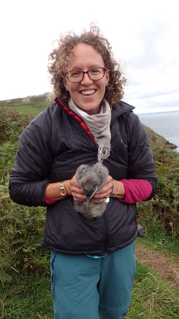Holding a young Shearwater