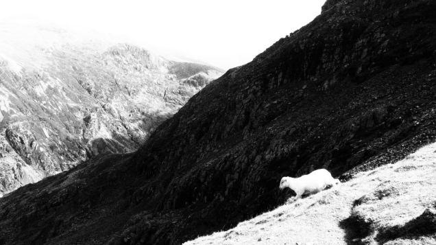 Snowdon walking