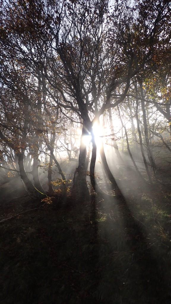 Autumn on the Camino