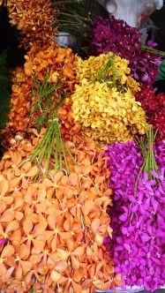 Orchids being sold for 10 baht (20p)