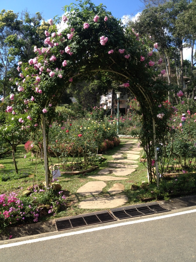 Rose garden, Bhuping Palace