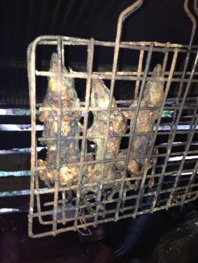 BBQ rat for dinner